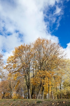 나무, 가을 시즌, 작은 피사계 심도에 노란색의 단풍을 가까이에서 촬영했습니다.