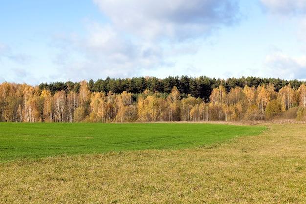 Снято крупным планом лес в осенний сезон возле сельскохозяйственного поля.