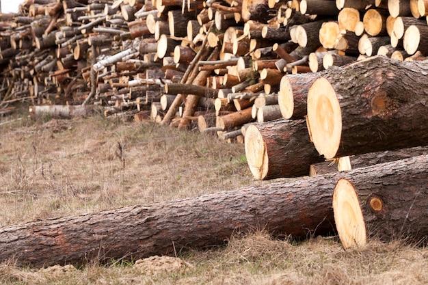 Сфотографированный крупным планом, заготовленный для обработки древесины. лес. весна
