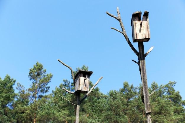 나무로 만든 새집의 클로즈업 촬영