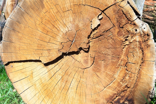 地面に横たわっている倒れた木の黄色い幹の写真のクローズアップ