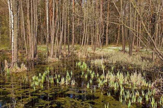 春の沼のクローズアップ写真