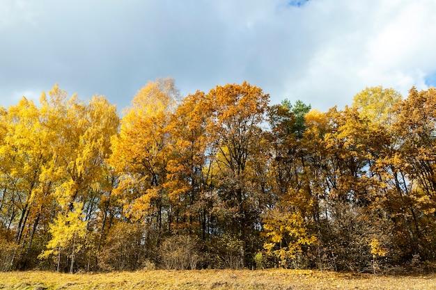На фото крупным планом пожелтевшие и упавшие на землю листья деревьев, небо,