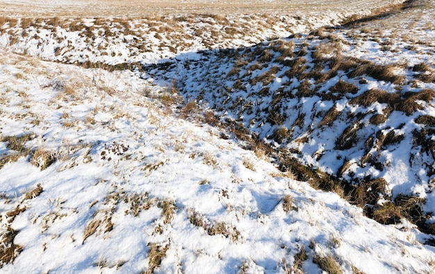 冬の雪の下で撮影された乾いた黄色い草