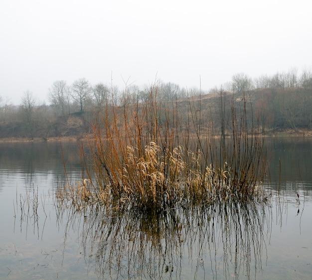 秋の季節に撮影された鈍い鬱病の森。写真。領土を流れる川
