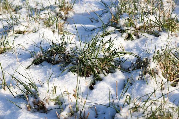 小雪が降った後の自然の写真。