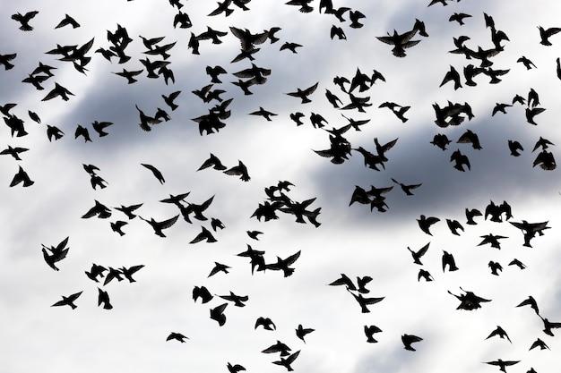 Сфотографировал птиц во время их полета в небе. очертания птиц