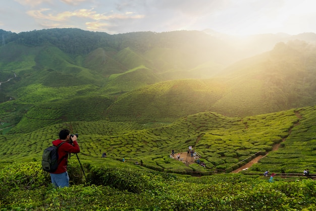 Photographer traveling into tea fields with mist in cameron highlands, malaysia