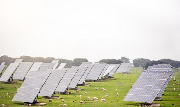 Фотоэлектрическая электростанция посреди поля с овечьими
