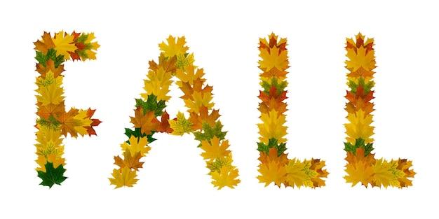 Фраза падение желтых, зеленых и оранжевых кленовых осенних листьев крупным планом. изолировать на белом фоне.
