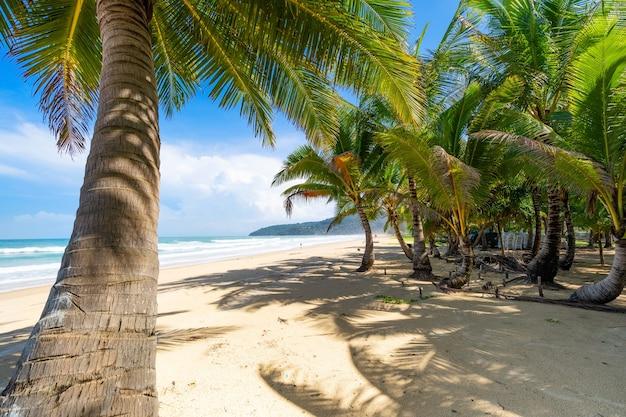 푸켓 카론 비치 카론 비치 주변에 야자수가 있는 여름 해변 푸켓 섬 태국, 여름 시즌에 푸른 하늘을 배경으로 하는 아름다운 열대 해변 copy space.