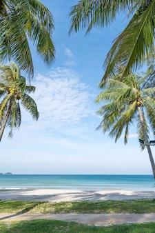 푸켓 파통 비치 파통 비치 주변에 야자수가 있는 여름 해변 푸켓 섬 태국, 여름 시즌에 푸른 하늘을 배경으로 하는 아름다운 열대 해변 copy space.