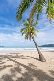 Phuket patong beach summer beach with palms trees around in patong beach phuket island thailand, beautiful tropical beach with blue sky background in summer season copy space.