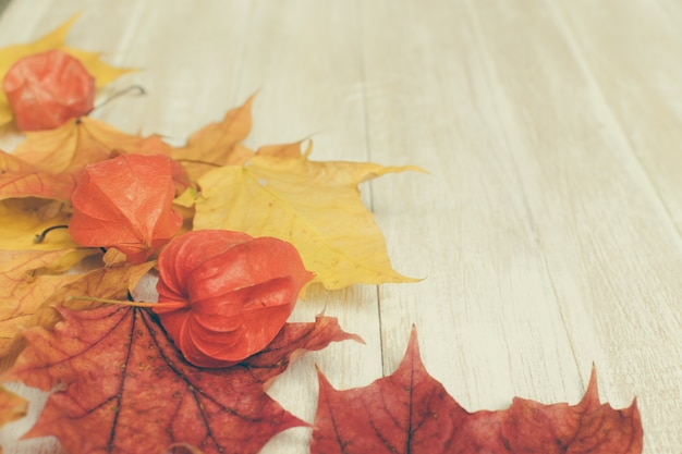 Physalis or chinese lantern plants and maple leaves. natural colorful autumn decorations.