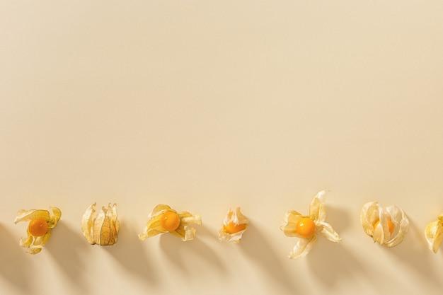 베이지색 종이 배경에 있는 physalis 과일 또는 physalis peruviana 작은 황금 열매