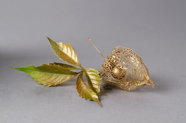 Physalis skeleton painted in gold.