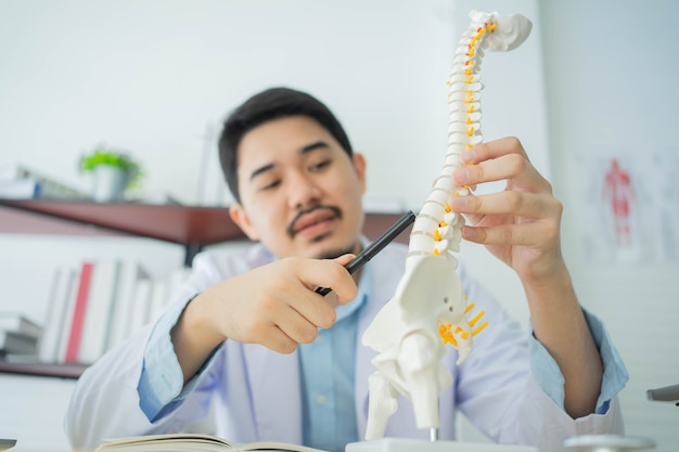 Physical therapist hand pointing on human skeleton at low back to advise and consult to patient