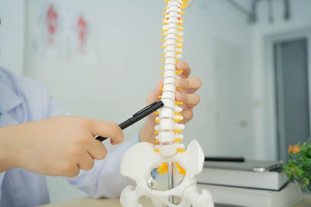건강 관리를 위해 사무실에서 허리에 있는 인간의 골격을 가리키는 물리 치료사 손