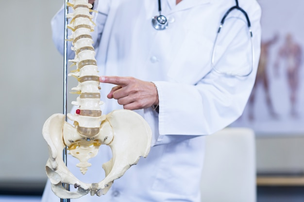Physiotherapist examining a spine model