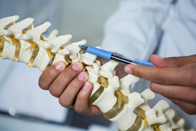 Physiotherapist pointing at spine model