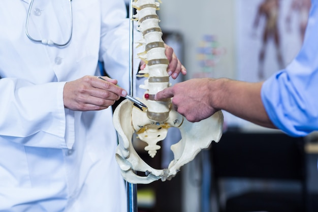 Physiotherapist showing the spine model to patient