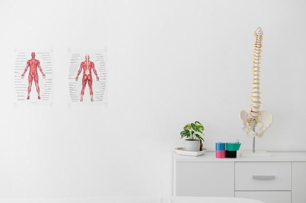 Clinica di fisioterapia con scheletro della colonna vertebrale su un tavolo