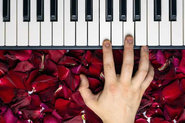 Pianist hand on red rose flower petals playing romantic serenade on valentine's day