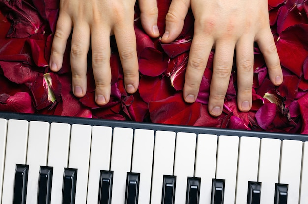 Pianist hands on red rose flower petals. romantic concept with piano keys, top view.
