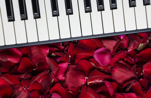 Piano keys with red rose petals, isolated, top view, copy space. romantic concept.