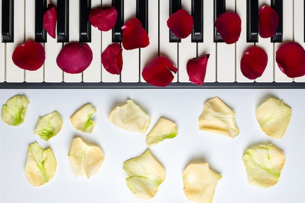 Piano keys with red and white rose flower petals, isolated, top view