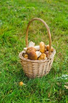 Собранные лесные грибы в корзине на зеленой траве фото высокого качества