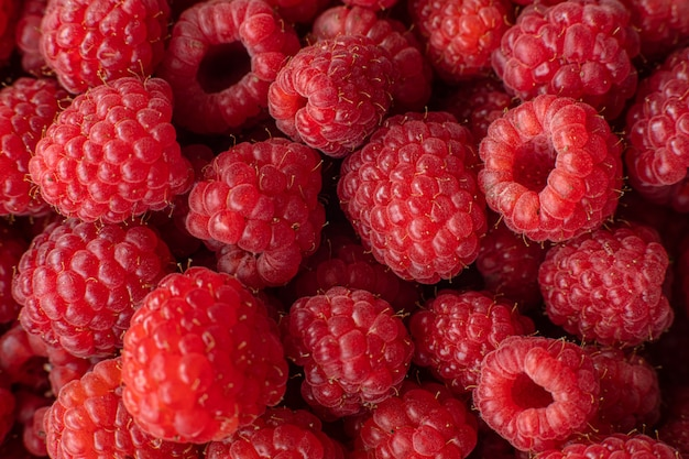 Picked organic raspberries in macro.