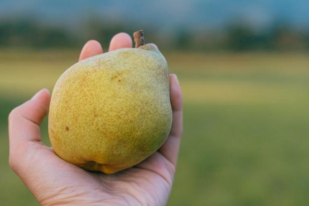 手で梨を摘む