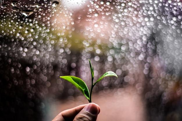 緑茶の葉を手で摘み、ボケの背景を眺める