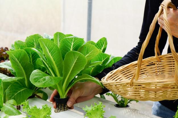 정원에서 신선한 야채를 따기