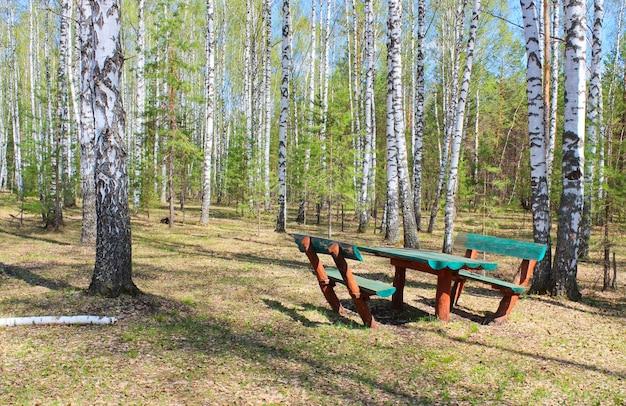 Площадка для пикника на лесной поляне среди березовой рощи