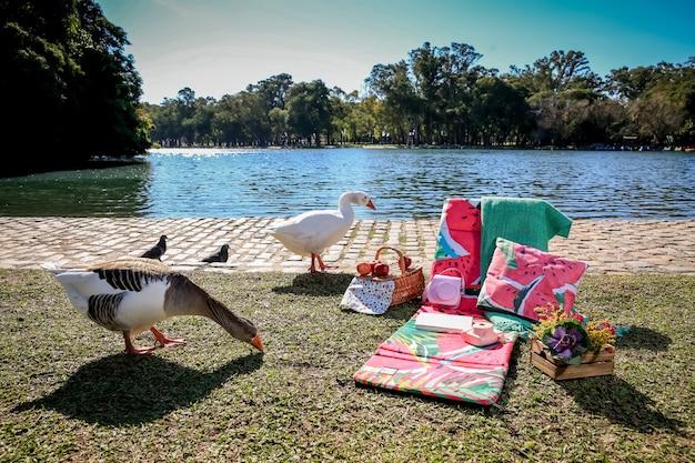 野生のガチョウと湖のある公園でのピクニック