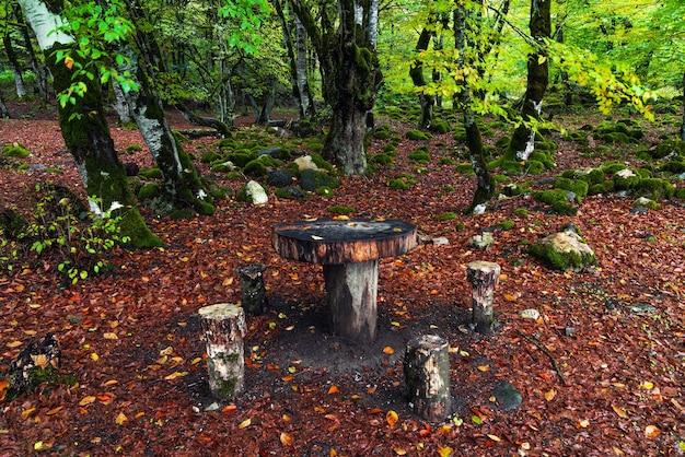 Место для пикника в лесу