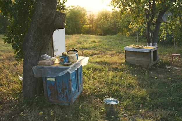 木々のようなピクニック郊外エリア太陽夏