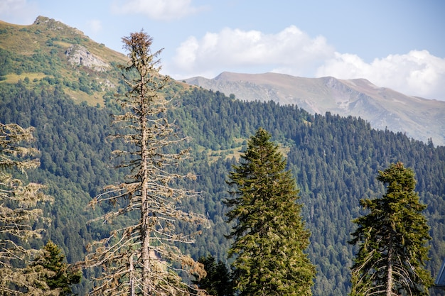 Picture of beautiful mountainous landscape with pine forest
