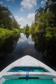 A picture of the black water river in tanjung puting national park