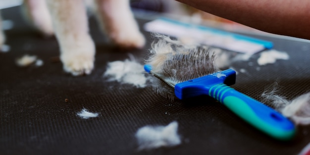 Picture of cut dogs fur on table. dog at dog hairdressers salon.