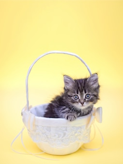 Picture of little cute fluffy kitten in basket on bright yellow background for birthday greeting card vertical