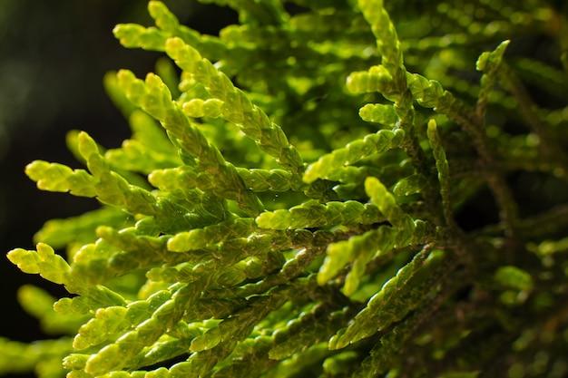 大きな緑の茂みの写真が木の近くに生えています。ハエのいる小さな小枝に焦点を当てた写真