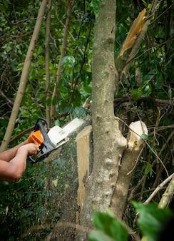 Изображение бензопилы, резающей дерево концепции окружающей среды