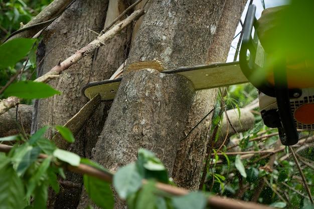 Картина бензопилой, режущей дерево в тропическом лесу