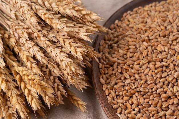 마른 콩과 밀 이삭의 그림입니다. 음식 배경입니다. 농업 개념, 소박한 스타일