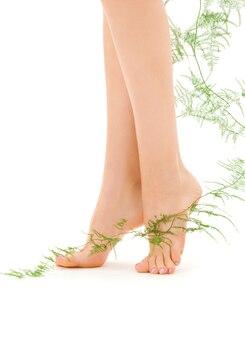 白の上に緑の植物と女性の足の写真