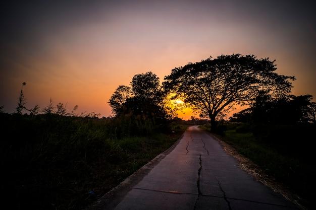 日没時の道路の写真シルエットの背景。木々と美しい間の道。