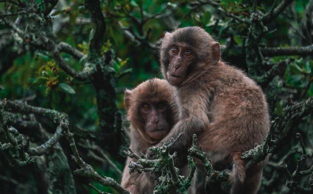 ジャングルの中で木の枝でお互いを保持している2つのサルの写真